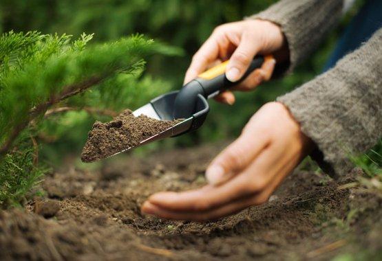 Заложите хорошее основание для роста ваших растений
